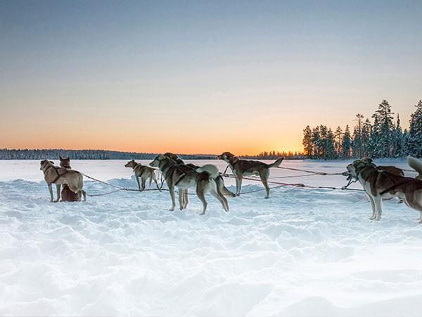 Este invierno, Laponia en Familia con Nuba exclusivo y en privado.