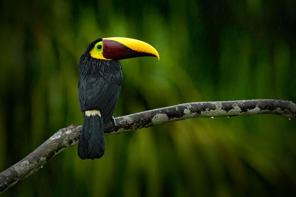 Loro Costa Rica