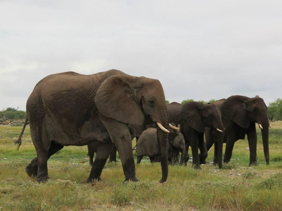 elefantes en Namibia