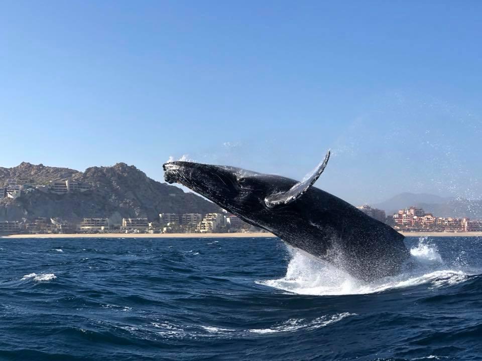 ballenas pelagic los cabos nuba mexico
