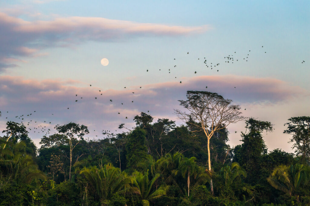 Amazonas Peruano