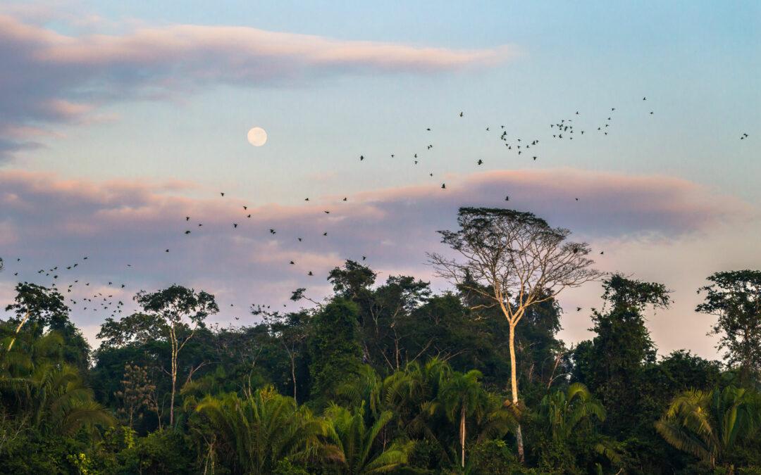 Los 'imprescindibles naturales' en Perú