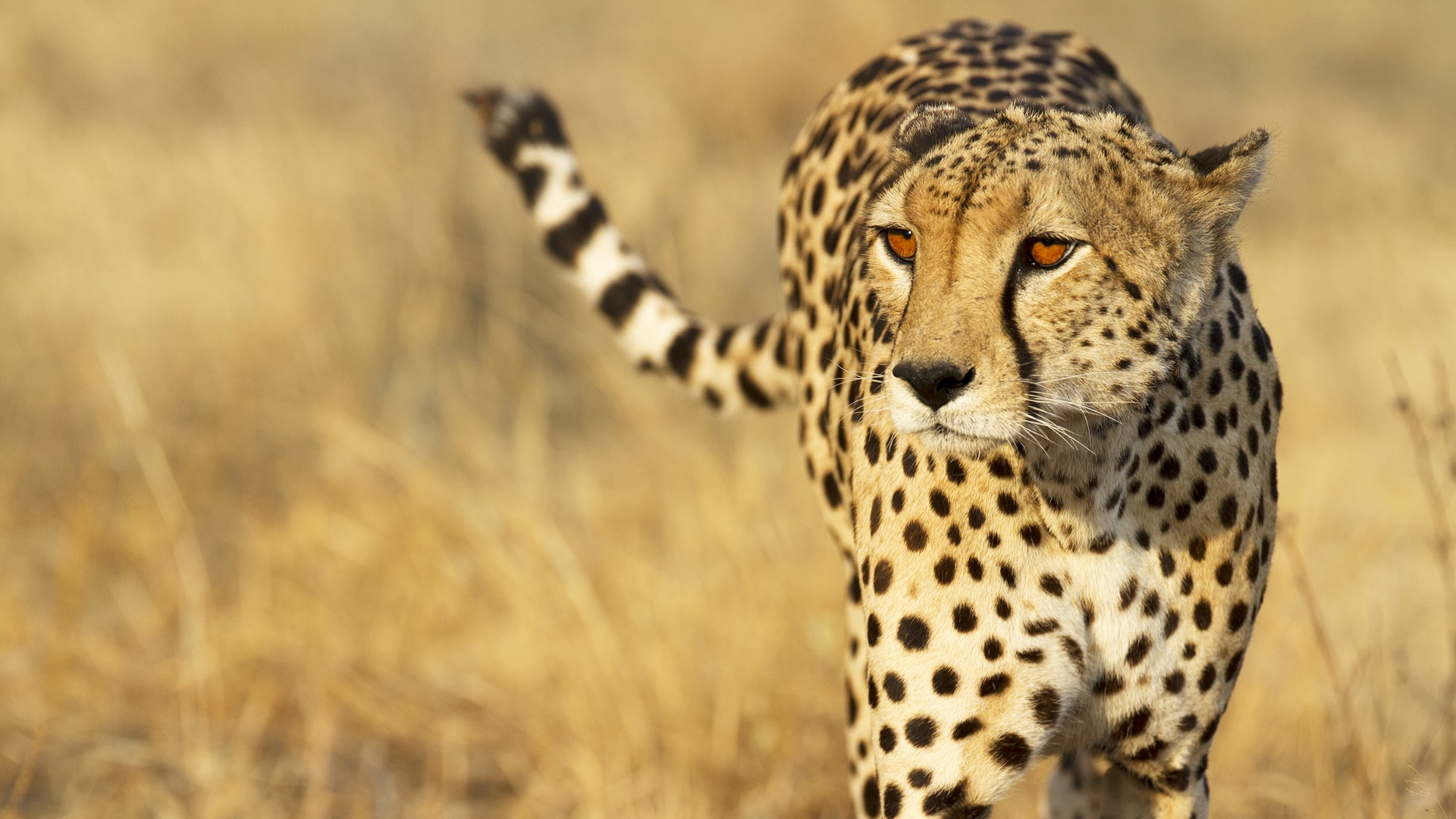 Safari a medida por Botswana