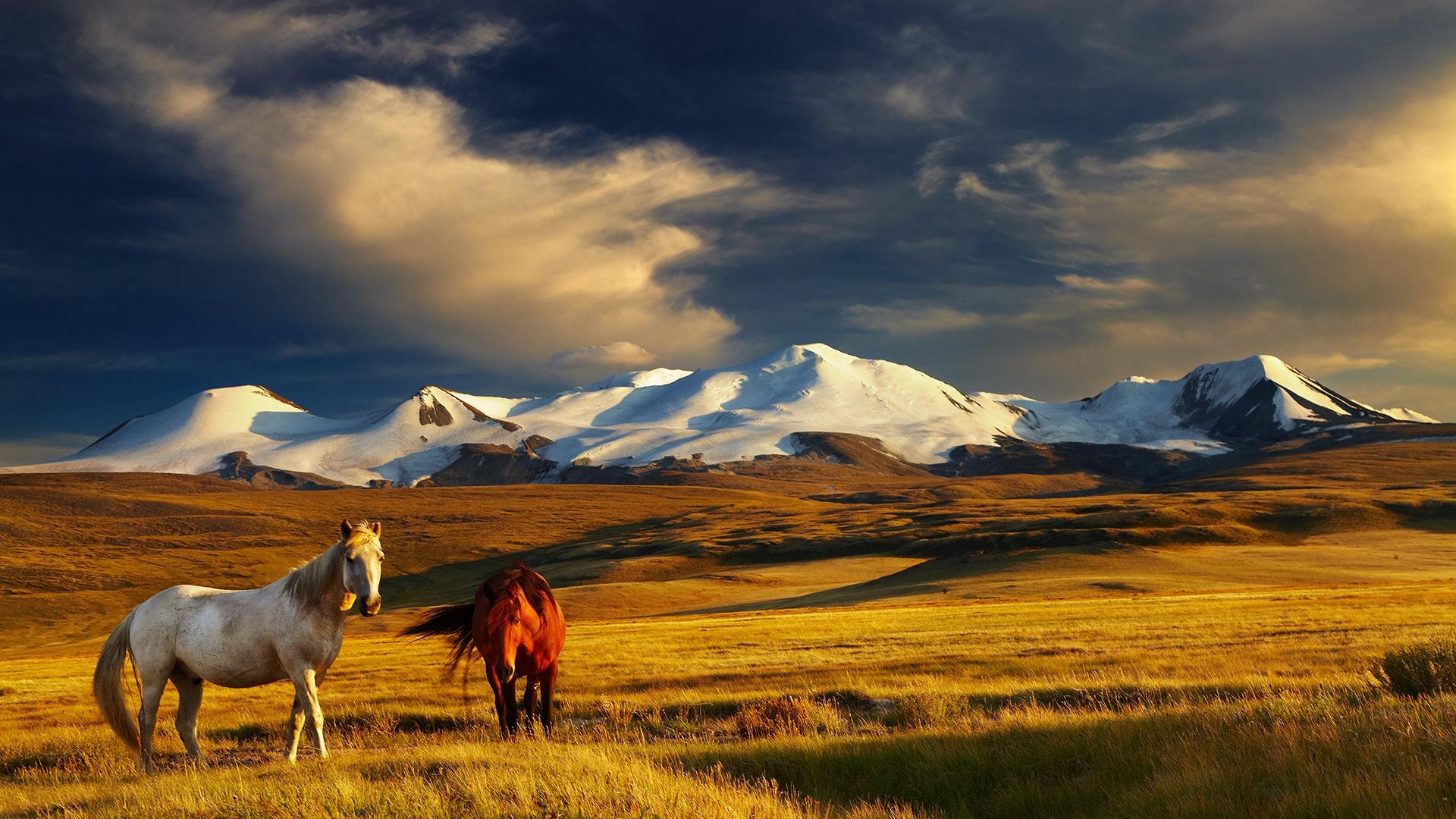 Viaje a medida a Mongolia