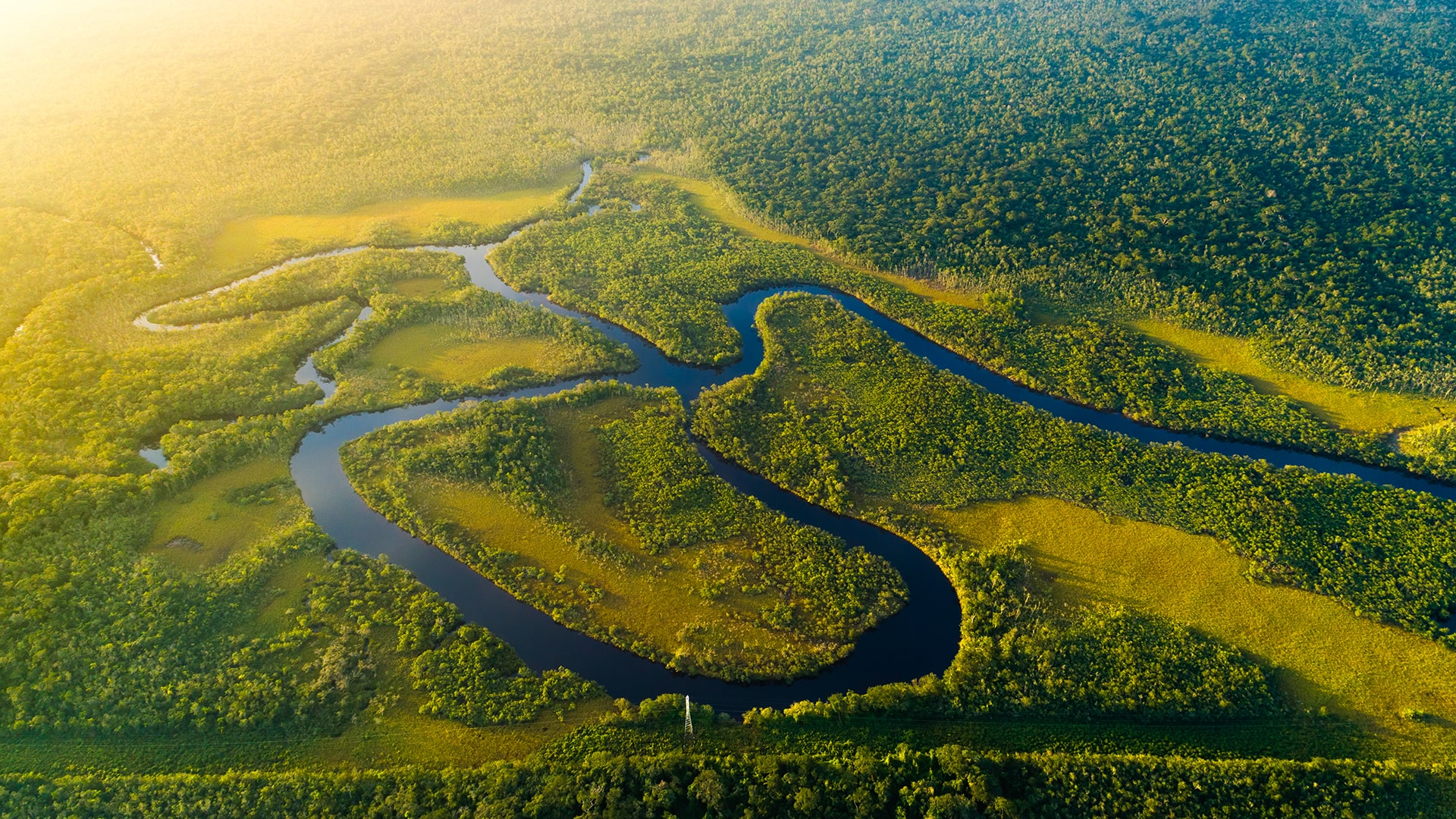 La Selva de Perú