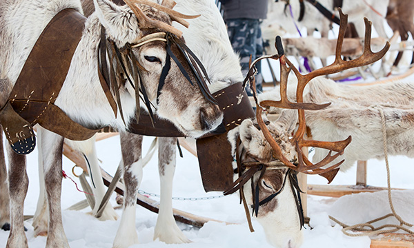 Trip to Lapland