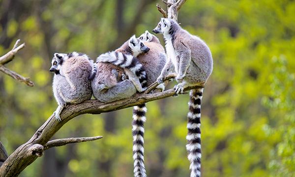 Trip to Madagascar
