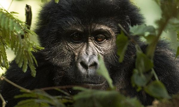 Viaja a Ruanda y Uganda