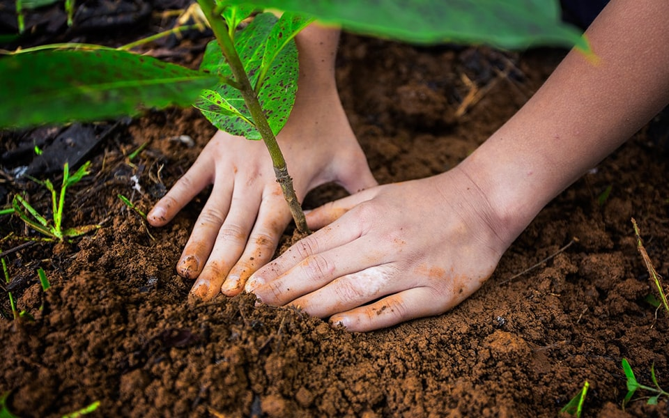 Reforestation of forest in Costa Rica