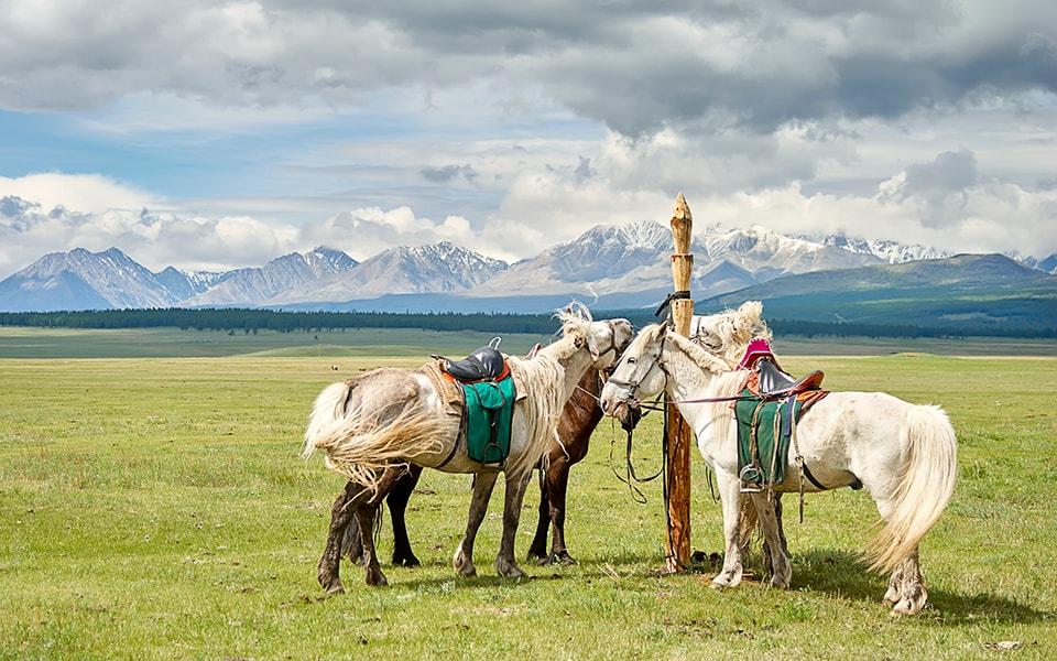 Mongolia on horseback
