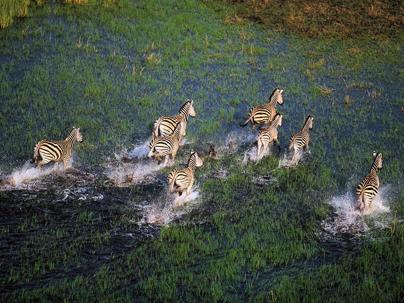 Botswana. Okavango Delta on horseback or by helicopter