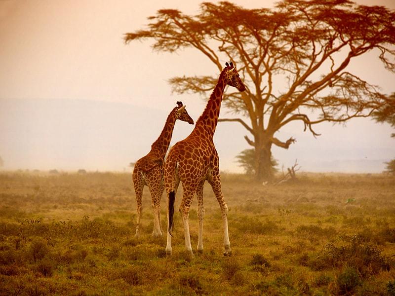Kenya. Tour of the Samburu Reserve