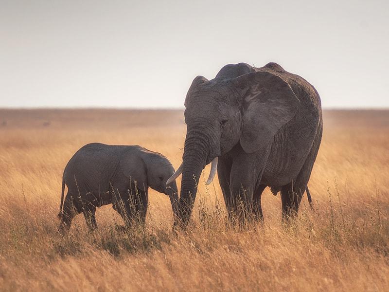 Namibia. Visit the Shiloh Wildlife Sanctuary