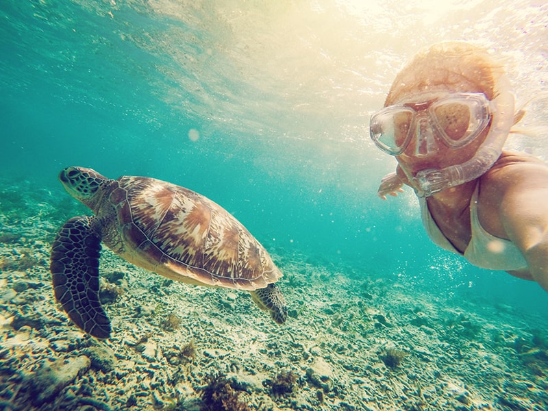 Beaches of Asia. Snorkeling among turtles in Maldives