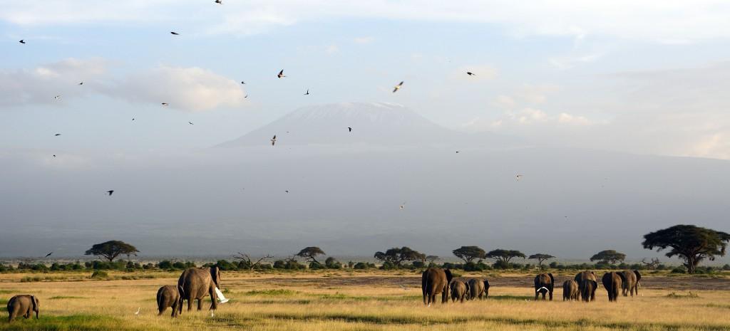 viaje incentivos kenia
