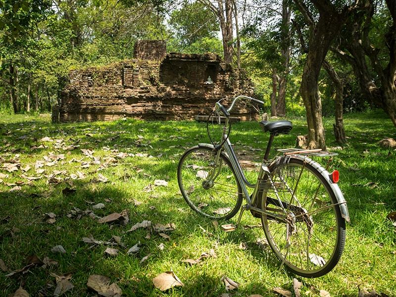 Sri Lanka. Recorrer los infinitos arrozales en bicicleta