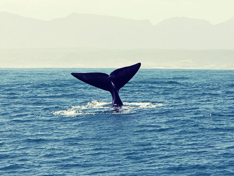 Sudáfrica. Contemplar ballenas