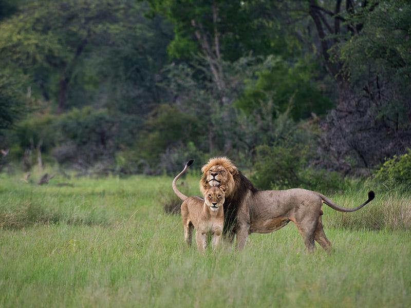 Zambia. Guided walking tours