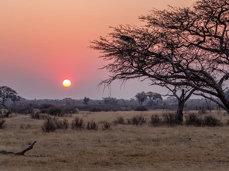 Zambia. Night Safari