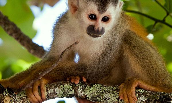 Descubre Costa Rica