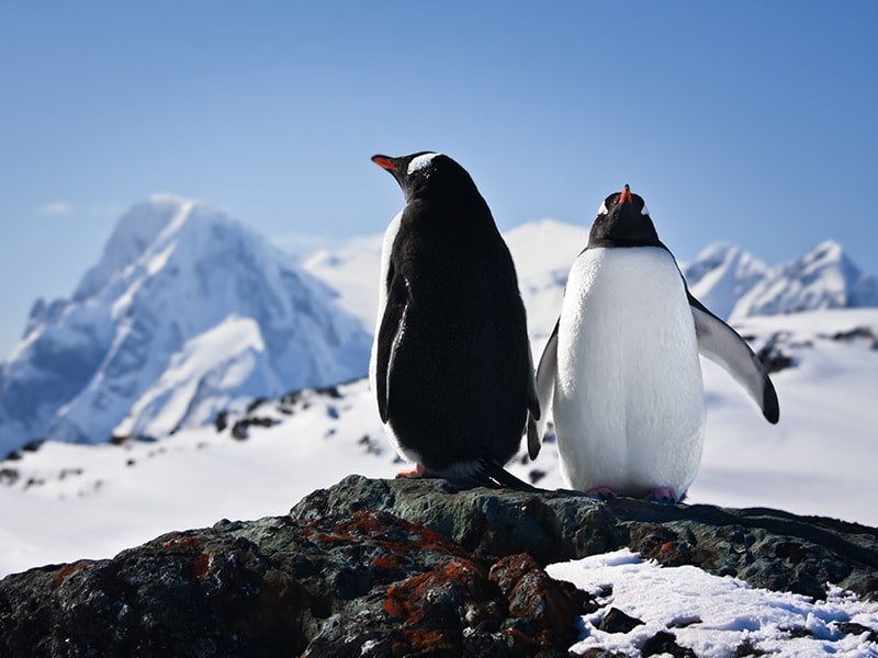 Antartic. See Livingston Island's populated penguin and elephant seal colonies