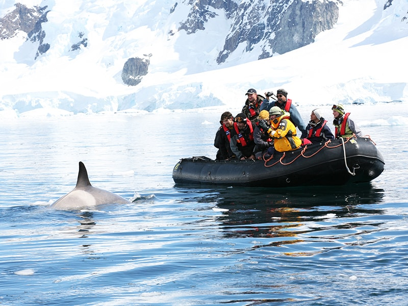 Antartic. Disembarkation tours with on-board scientists