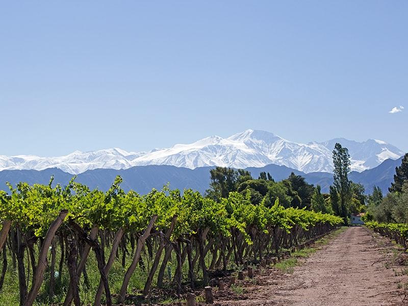 Argentina. Discover Mendoza's vineyards