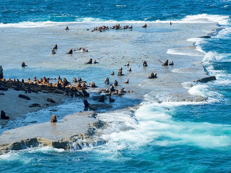 Argentina. Snorkeling among sea lions in Peninsula Valdés