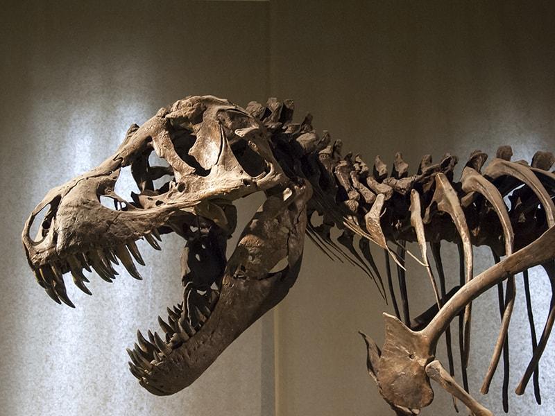 Estados Unidos. Colarse por la noche en el mítico Museo de Ciencias Naturales