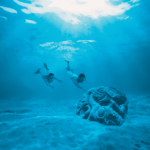 Polinesia, Nuba, Buceo