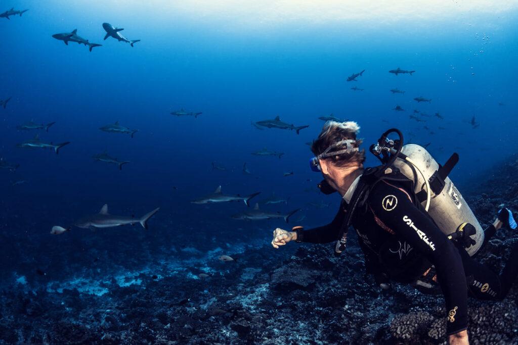 tiburones nuba