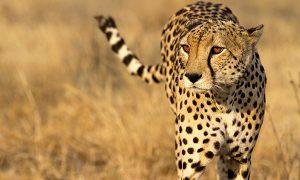 Nuba-viaje-a-botswana