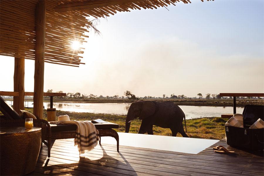 Elefante merodeando alrededor del lodge en Botswana