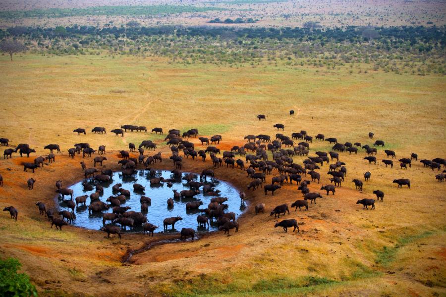 Sudafrica NUBA