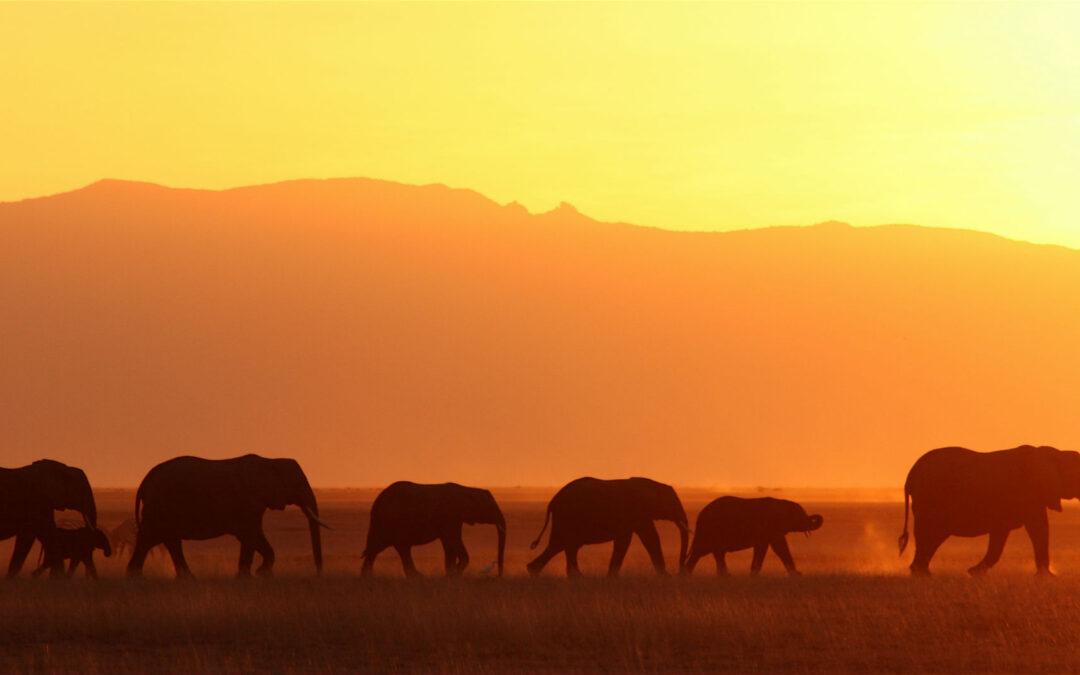 Proyectos que emocionan: El orfanato de elefantes de Kenia