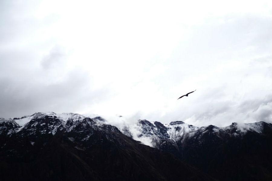 2. Avistamiento del vuelo del Cóndor en Colca