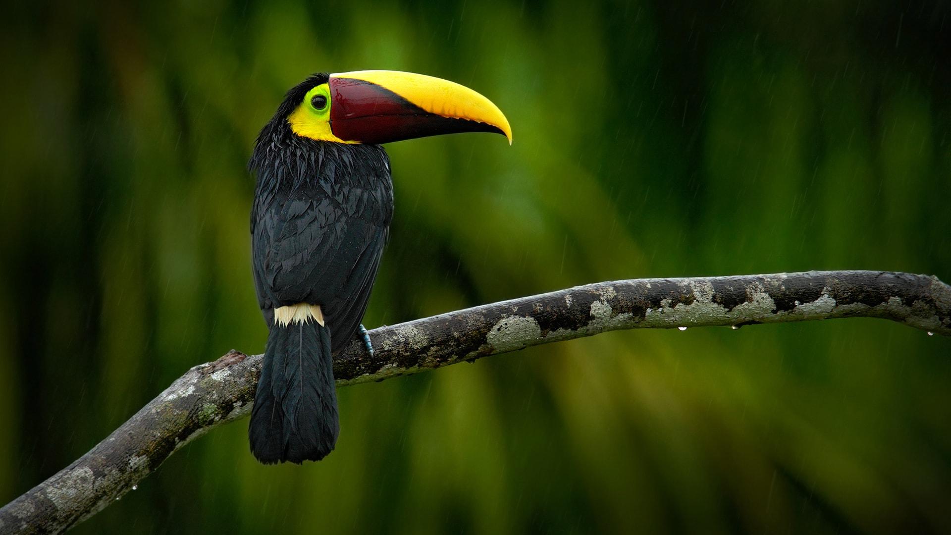 Las Selvas de Costa Rica