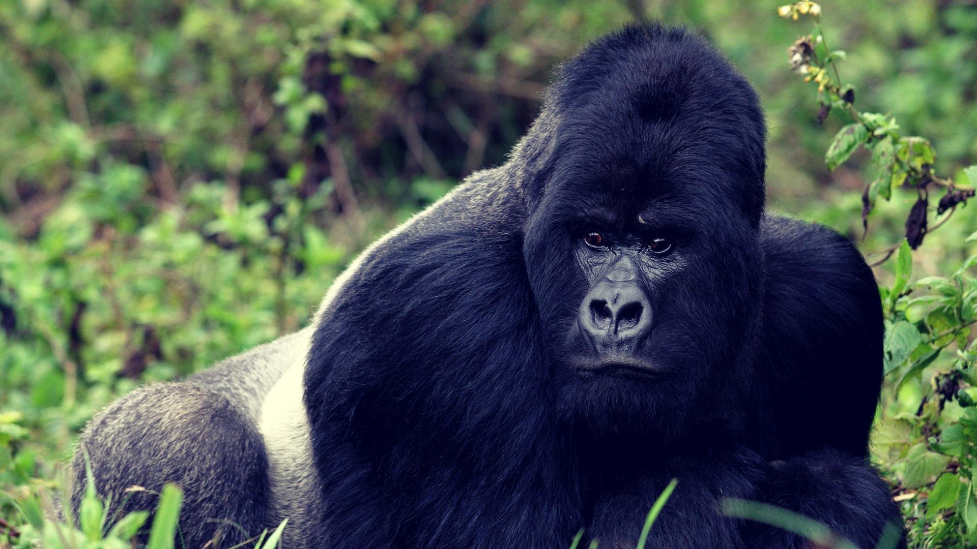 Descubre Ruanda y Uganda