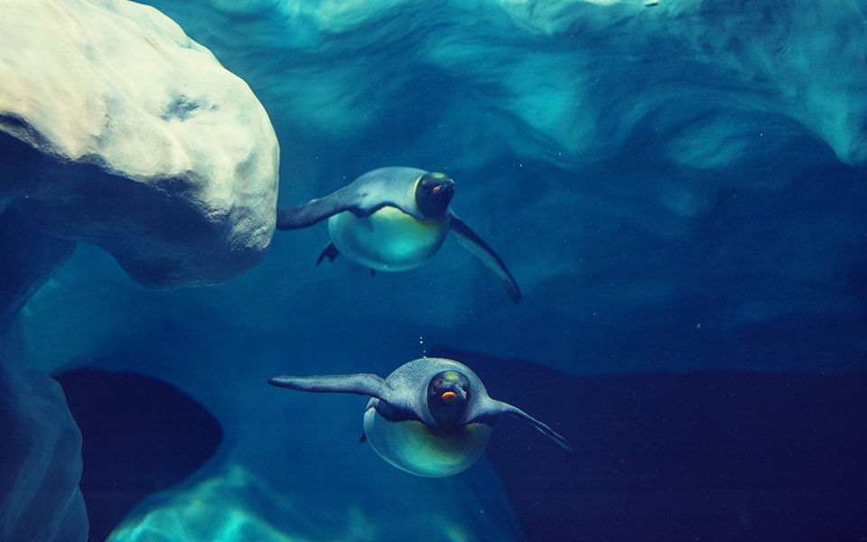 Buceo bajo el hielo