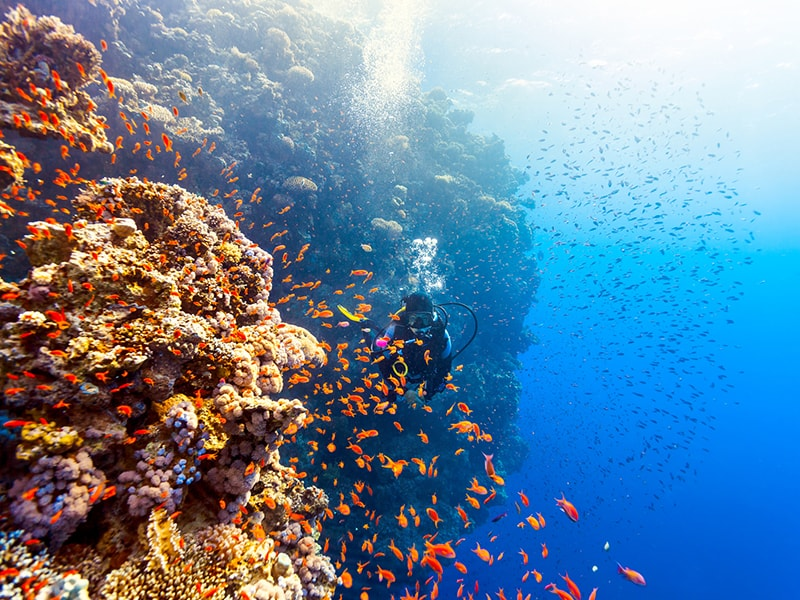 Egypt. Diving in the Red Sea