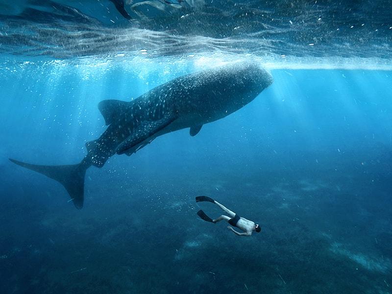 Filipinas. Buceo en sus cálidas y tranquilas aguas