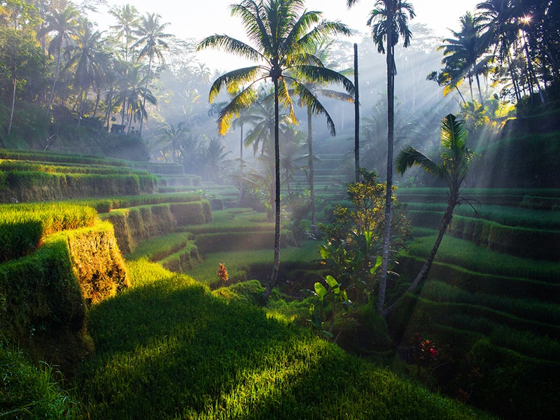 Indonesia. Discover the heart of Bali