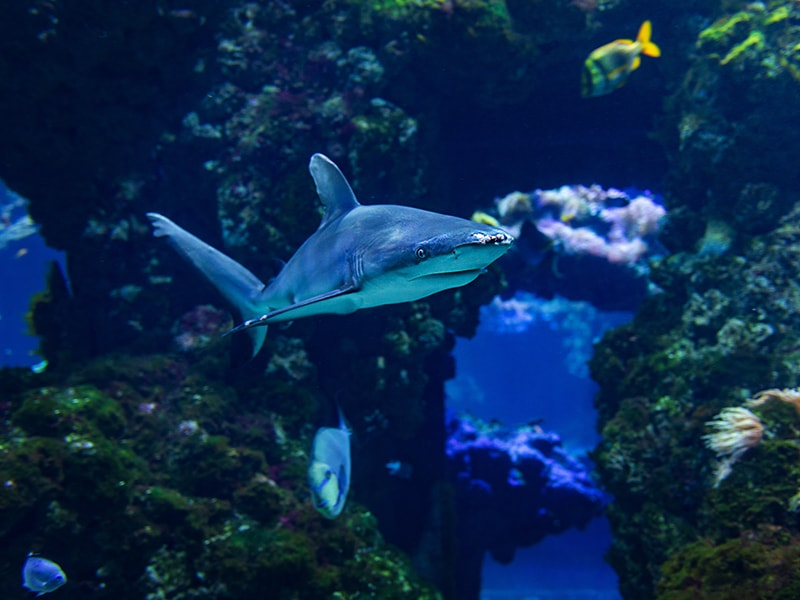 """Madagascar. Diving in marine """"cathedrals"""" surrounded by manta rays"""