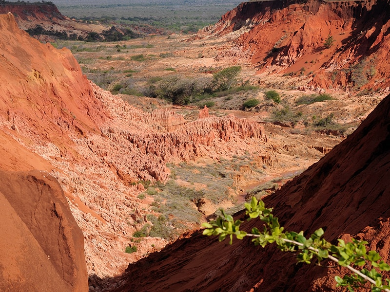 Madagascar. Enjoy the millenary sea beds