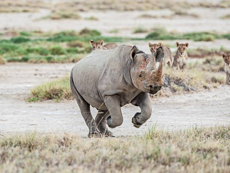Namibia. Rhino tracking by rafting