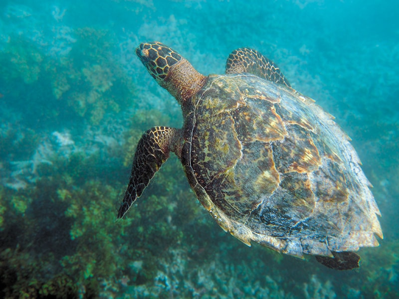 Beaches of Africa. Visit one of the most important turtle nesting areas