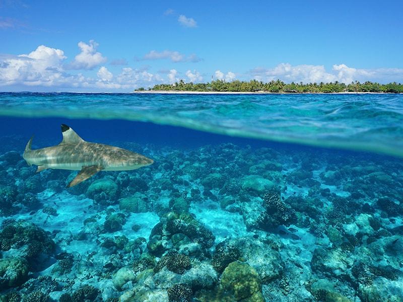 Polynesia. Surf the Southern Seas