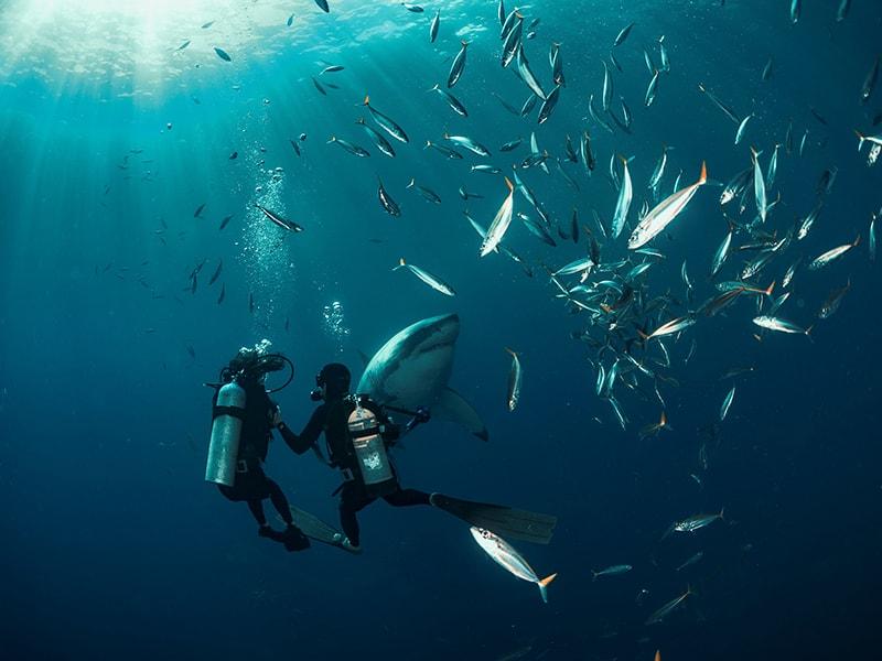 Sudáfrica. Buceo con tiburones