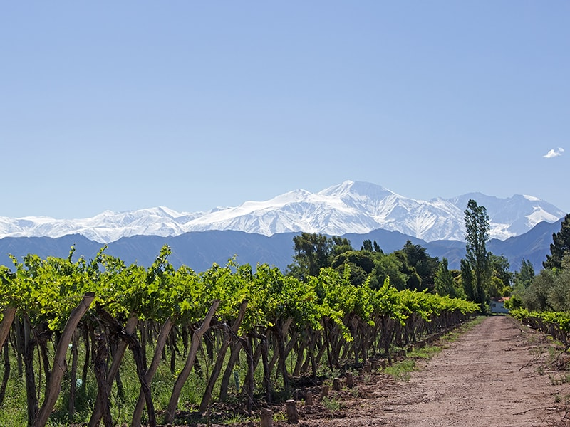 Argentina. Discover Mendoza's vineyards
