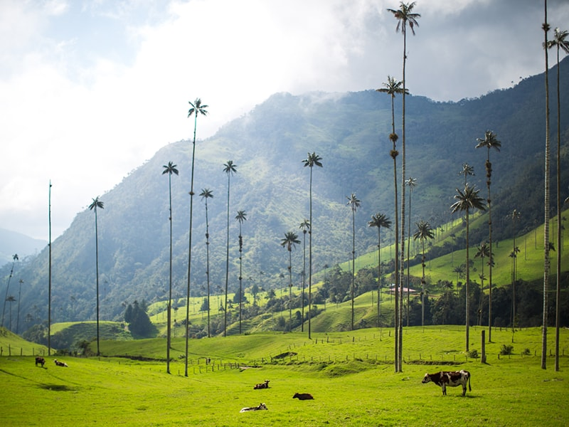 Colombia. Hot air balloon flights or horseback rides through the Colombian coffee Region
